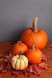 Fall Pumpkin and Decorative Squash Stock Image