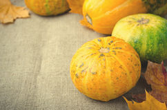Fall pumpkin and decorative squash with autumn leaves on a linen background Stock Images