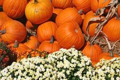 Fall Pumpkin Display Stock Image
