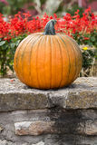 A Fall Pumpkin and flowers Royalty Free Stock Images