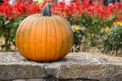 A Fall Pumpkin and flowers Stock Photos