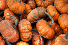 Fall Pumpkin Gourds. A collection of pumpkin gourds ready for harvest, Halloween and Thanksgiving stock photo