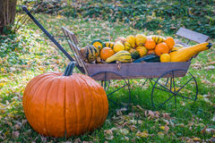 Fall Pumpkin and Gourds Royalty Free Stock Photography