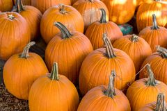 Fall pumpkin harvest for sale royalty free stock photo