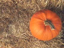 Fall Pumpkin With Hay Background Shot From Directly Above Stock Photos