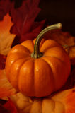 Fall - Pumpkin and Leaves royalty free stock image