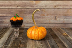 Fall pumpkin muffin with decorative gourd Stock Images