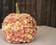 Fall pumpkin with mums. A pumpkin decorated with mums as a fall outdoor centerpiece royalty free stock photos