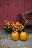 Fall, Pumpkin Royalty Free Stock Photography