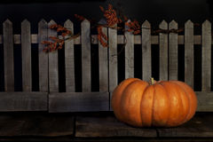 Fall Pumpkin Picket Fence. A Cinderella pumpkin also known as the Rouge vif DEtampes pumpkin in front of a rustic picket fence with dried twisted vine Royalty Free Stock Images