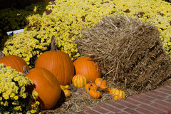 Fall pumpkin scene Royalty Free Stock Image