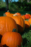 Fall Pumpkins Royalty Free Stock Photography