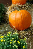 Fall Pumpkins. Pumpkins and mums on hay bales at the farmers market stock images