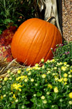 Fall Pumpkins. Pumpkins and mums on hay bales at the farmers market royalty free stock photo