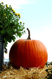 Fall Pumpkins. Pumpkins and mums on hay bales at the farmers market royalty free stock photography