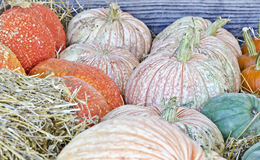 Fall pumpkins Royalty Free Stock Images