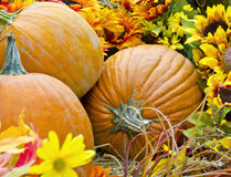 Free Fall Pumpkins Royalty Free Stock Images - 26971659
