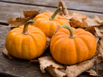 Fall pumpkins. On leaves and wood stock images