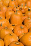 Fall pumpkins. Royalty Free Stock Photography