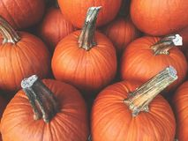 Fall Pumpkins Background stock photography