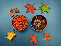 Fall, pumpkins, cones, maple leaves Stock Photos