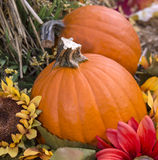 Fall Pumpkins. For  decorations or eating Stock Photography