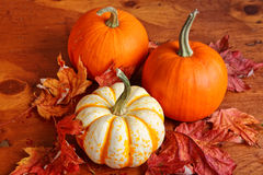 Fall Pumpkins and Decorative Squash Royalty Free Stock Photography