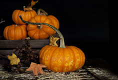 Fall Pumpkins. Decorative fall pumpkins on straw covered wood planks, several small pumpkins in wood crate, black background Royalty Free Stock Photo