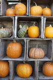 Fall Pumpkins. A display of fall pumpkins and gourds arranged in old farm crates royalty free stock image