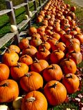 Fall pumpkins. And rail fence in Maine Royalty Free Stock Photography
