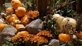 Fall pumpkins and flowers. Still life of fall pumpkins and flowers in outdoor display Stock Images