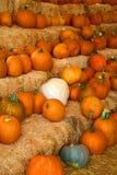 Fall Pumpkins Stock Photo
