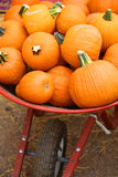 Fall Pumpkins Stock Image