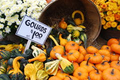 Fall Pumpkins and Gourds. A local New England farm stand in the fall Royalty Free Stock Photos