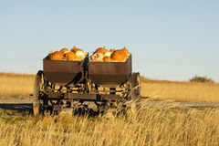 Fall Pumpkins. Pumpkins and gourds in a farm implement Royalty Free Stock Photos