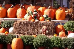 Fall pumpkins, hay and scarecrows Stock Image
