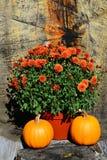 Fall pumpkins and mums decoration Stock Photography