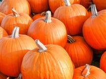 Fall Pumpkins Stock Photography