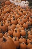 Fall Pumpkins Royalty Free Stock Images