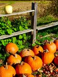 Fall pumpkins. And rail fence in Maine Stock Photography