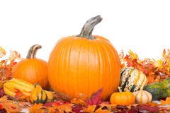 Fall Pumpkins and Squash Stock Photography