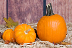 Fall Pumpkins Royalty Free Stock Photography