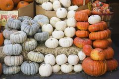 Fall pumpkins variety for sale. At open air market royalty free stock photography