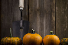 Fall pumpkins with white hand shovel. Fall pumpkins with white hand shovel and rustic background Stock Photo