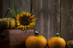 Fall pumpkins with yellow sunflower. And rustic background Stock Photos