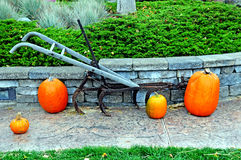 Fall punpkin display. Image of a fall pumpkin display Stock Image