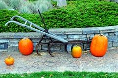 Fall punpkin display Stock Image