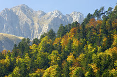 Fall in Pyrenees. Fall forest in the Pyrenees mountains Stock Photography