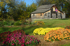 Fall Quilt Barn. A beautiful wooden quilt barn with a patriotic red, white and blue quilt on it with fall mums in the foreground.  Located on the grounds of Stock Photos