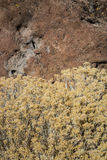Fall Rabbit Brush over Stone Royalty Free Stock Image